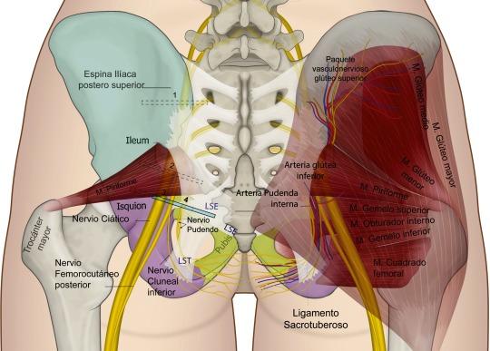 Anestesia regional guiada por ultrasonido en territorio del nervio ...