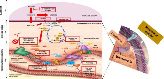 biguanidas metformina diabetes cáncer