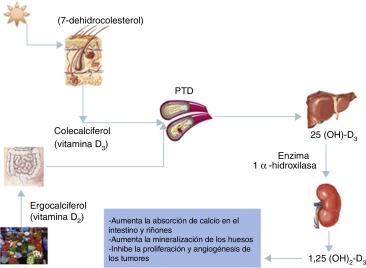 dieta de diabetes polimorfismo vdr