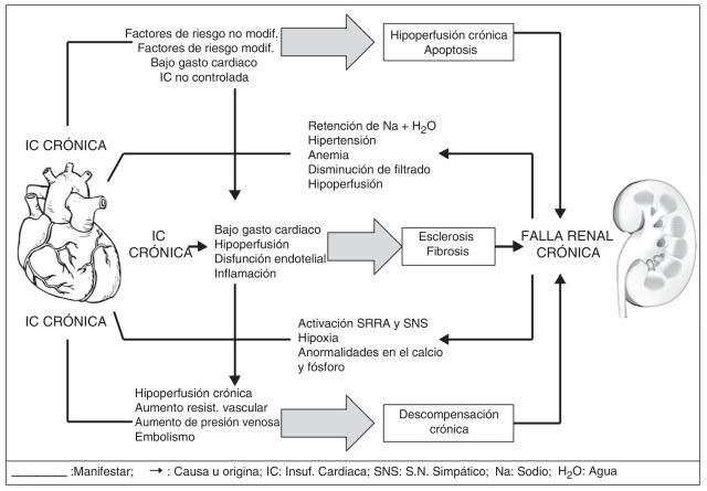 Mecanismo de hipertensión e insuficiencia renal