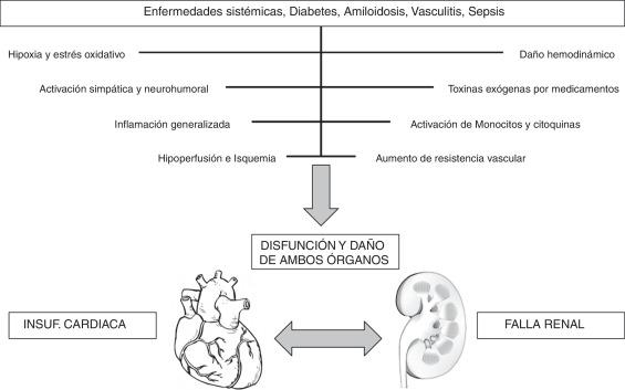 Cómo la hipertensión afecta los riñones y los pulmones