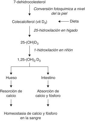 intolerancia hereditaria a la fructosa fisiopatología de la diabetes