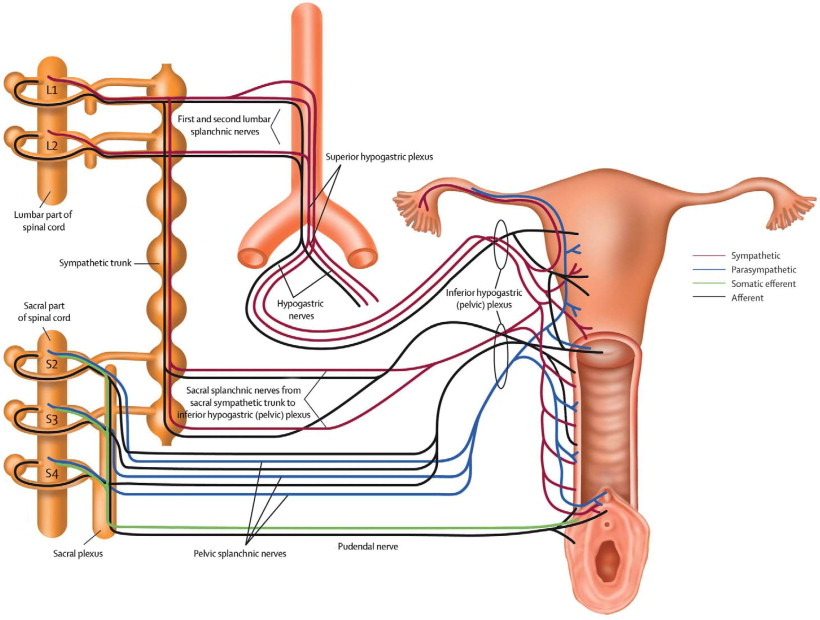 cord sexual Spinal dysfunction injury