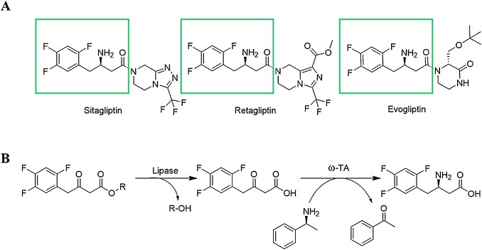 Enzymatic synthesis of sitagliptin intermediate using a novel ω
