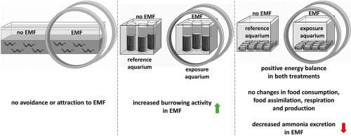 Effect of low frequency electromagnetic field on the