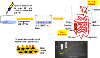 Capecitabine Encapsulated Chitosan Succinate Sodium Alginate Macromolecular Complex Beads For Colon Cancer Targeted Delivery In Vitro Evaluation Sciencedirect