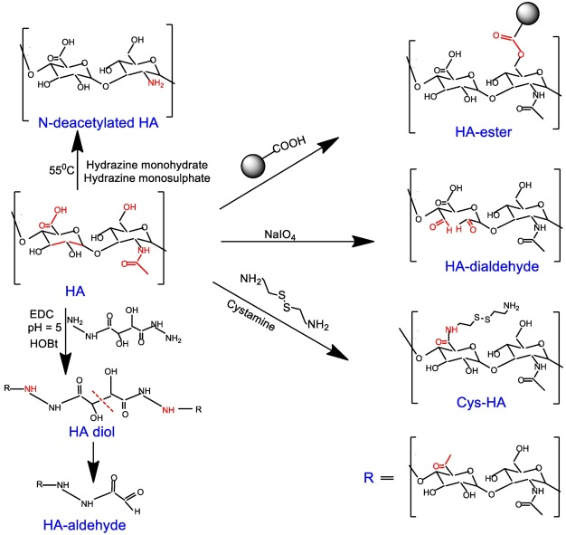 Modified hyaluronic acid based materials for biomedical