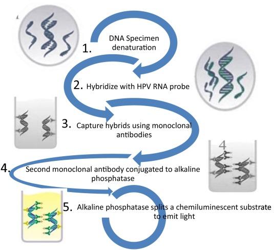 hpv vírus egy bór fedő papillom entfernen