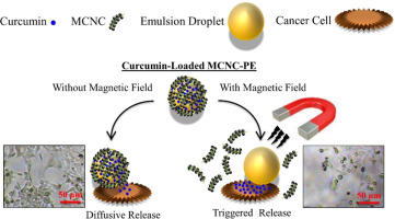 Magnetic cellulose nanocrystal stabilized Pickering