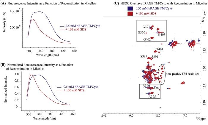 Dynamic oligomerization of hRAGE's transmembrane and
