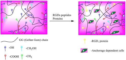 A review on latest innovations in natural gums based hydrogels