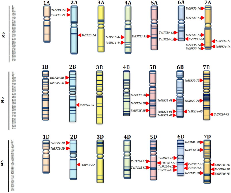 Genome-wide identification, characterization, and expression