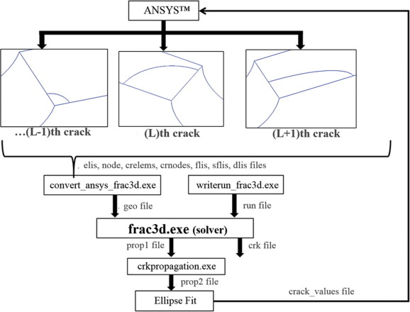 Non-planar crack growth analyses of multiple cracks in thin