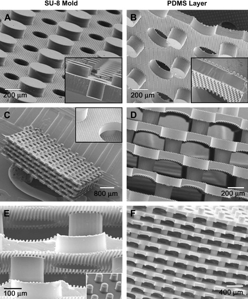 A three-dimensional scaffold with precise micro-architecture