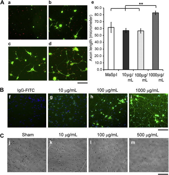 Physical and biological regulation of neuron regenerative