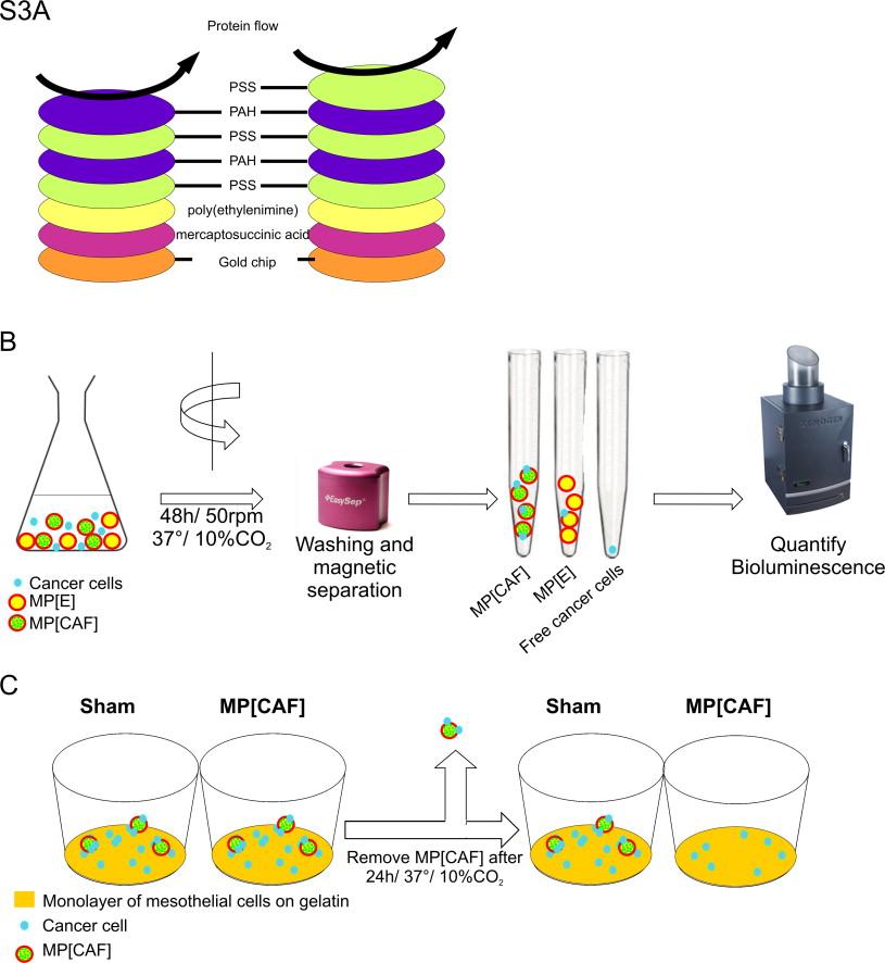 Tumor-environment biomimetics delay peritoneal metastasis