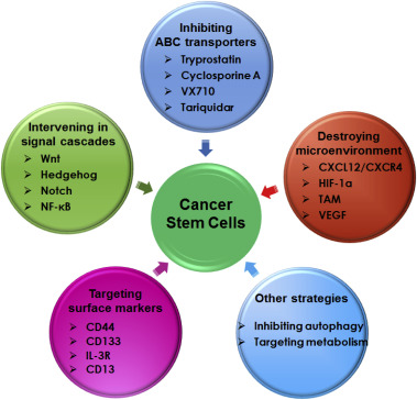 Nanomedicine Mediated Cancer Stem Cell Therapy Sciencedirect
