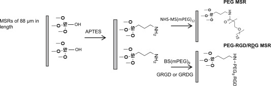 The effect of surface modification of mesoporous silica micro-rod
