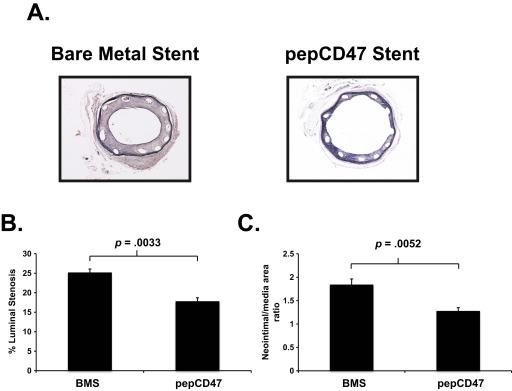 Enhanced biocompatibility of CD47-functionalized vascular