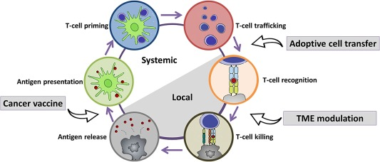 Nanomaterials for cancer immunotherapy - ScienceDirect
