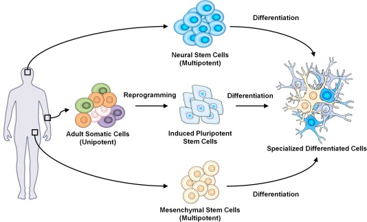 When stem cells meet graphene: Opportunities and challenges in