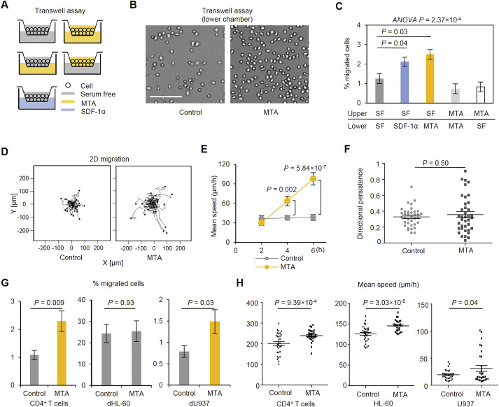 Mta Promotes Chemotaxis And Chemokinesis Of Immune Cells Through