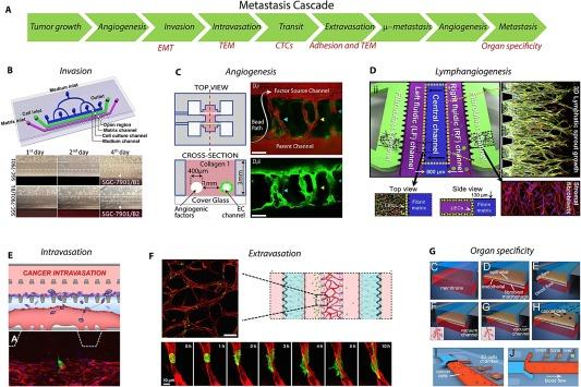 Organ-on-chip models of cancer metastasis for future