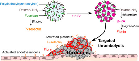 Thrombolytic therapy based on fucoidan-functionalized polymer nanoparticles targeting P-selectin - ScienceDirect