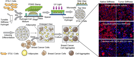 Stromal cell-laden 3D hydrogel microwell arrays as tumor