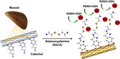Mussel-inspired catalytic selenocystamine-dopamine coatings