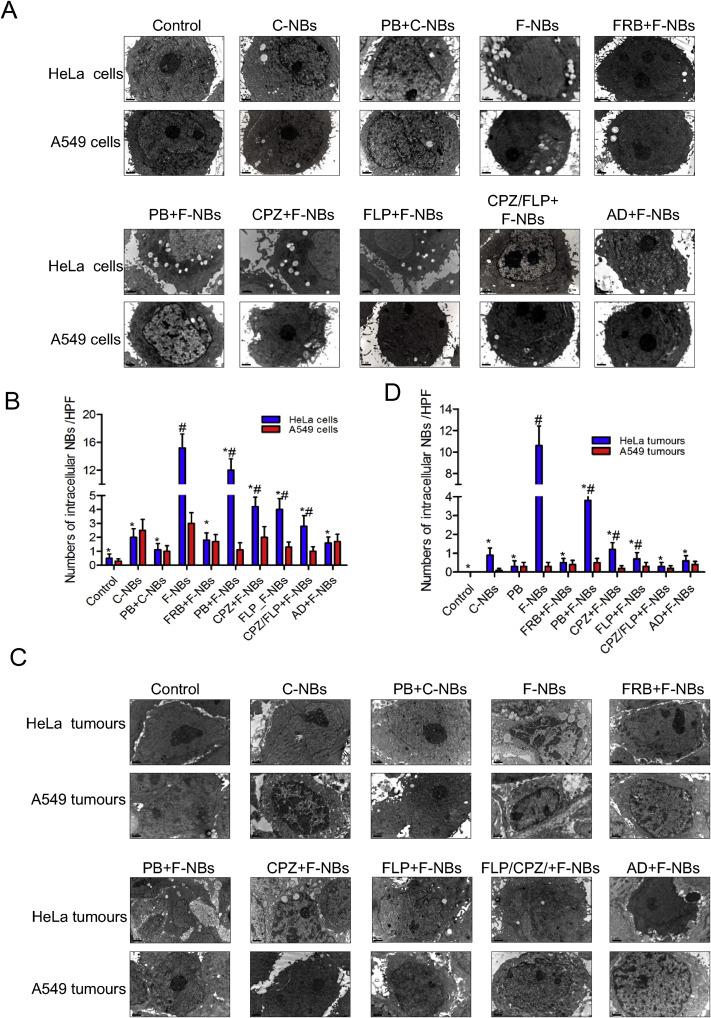 Folate-conjugated nanobubbles selectively target and kill