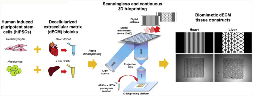 Scanningless and continuous 3D bioprinting of human tissues with