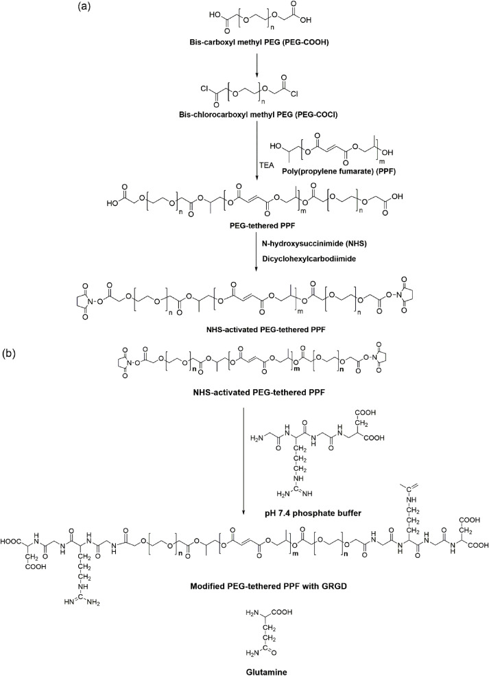 Poly(propylene fumarate)-based materials: Synthesis