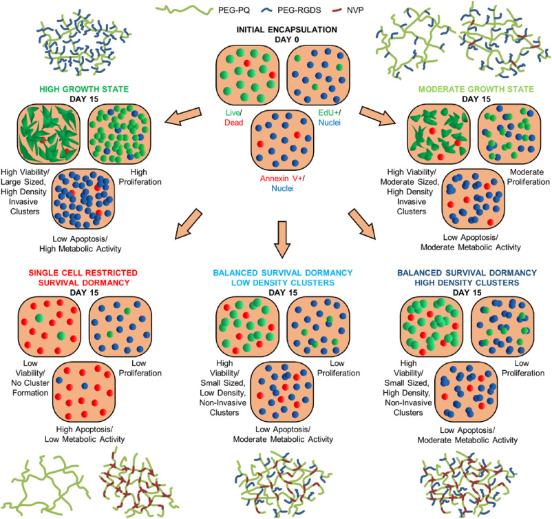 Tunable hydrogels for controlling phenotypic cancer cell states to on