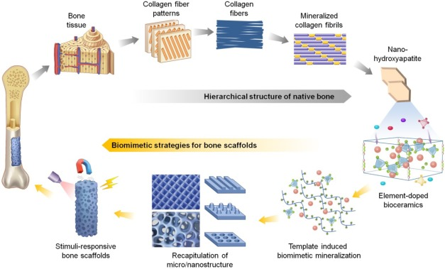 Hierarchically designed bone scaffolds: From internal cues