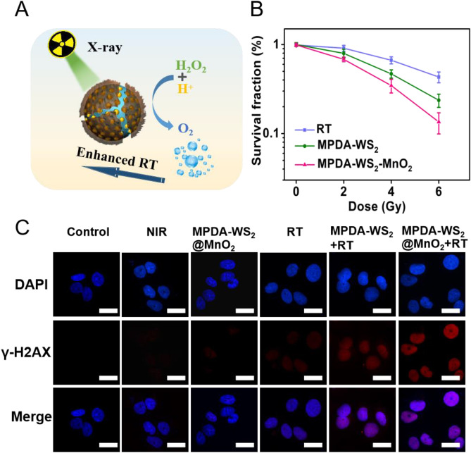Oxygen-supplementing mesoporous polydopamine nanosponges with WS2
