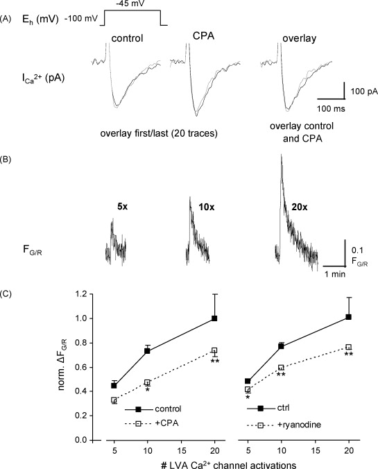Burst Discharges In Neurons Of The Thalamic Reticular Nucleus Are