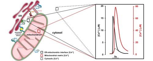 The Endoplasmic Reticulum Mitochondria Coupling In Health