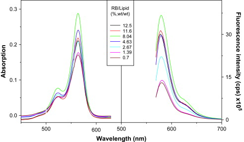Absorption And Emission Spectral Shifts Of Rose Bengal Associated