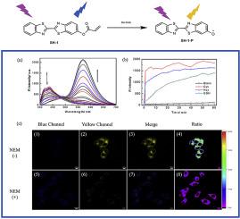 A ratiometric fluorescent probe for rapidly detecting bio