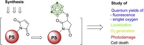 β-Maleimide substituted meso-arylporphyrins: Synthesis
