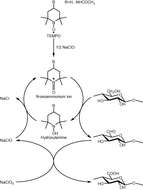 Oxidation Of Regenerated Cellulose With Naclo2 Catalyzed By Tempo