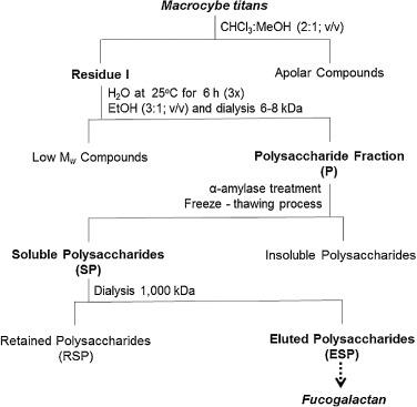 fucogalactan from the giant mushroom macrocybe titans inhibits