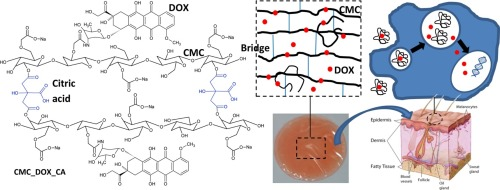 Bioengineered Carboxymethyl Cellulose Doxorubicin Prodrug Hydrogels For Topical Chemotherapy Of Melanoma Skin Cancer Sciencedirect