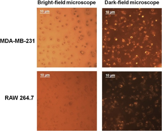 Tumor acidity and CD44 dual targeting hyaluronic acid-coated