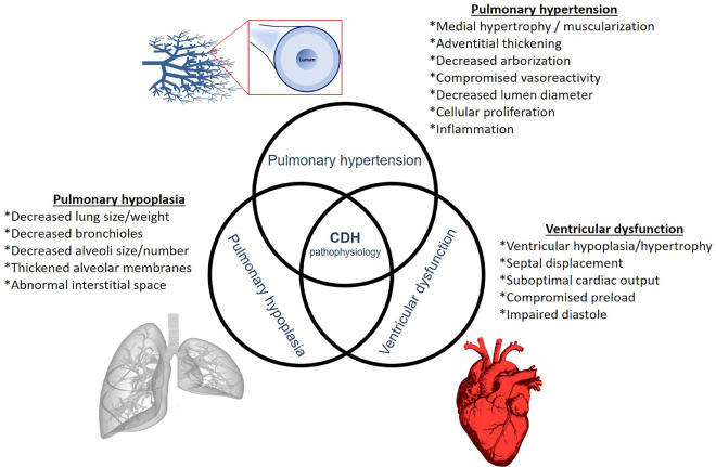 Kcnk3 hipertensión en niños
