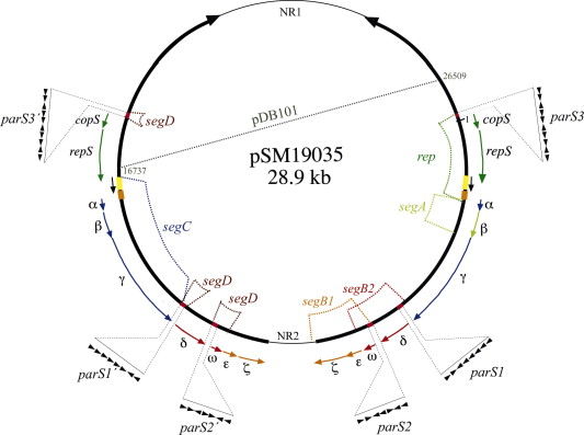 Plasmid Psm19035 A Model To Study Stable Maintenance In Firmicutes