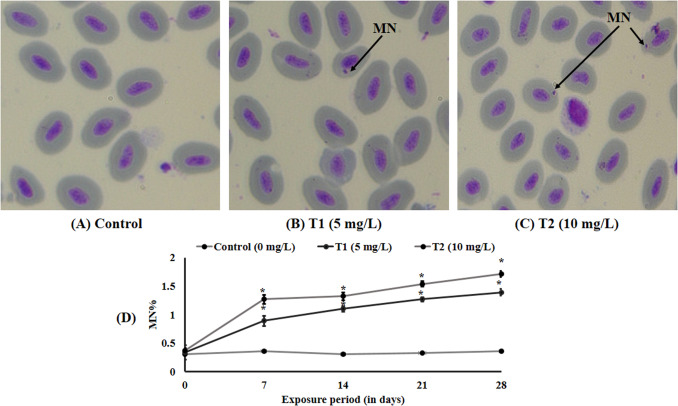 Zn2+ induced molecular responses associated with oxidative
