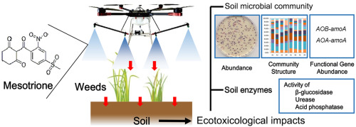 Effects of the herbicide mesotrione on soil enzyme activity