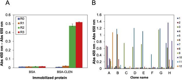A novel murine antibody and an open sandwich immunoassay for